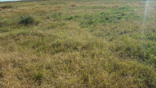 muy buen campo ganadero en maipu