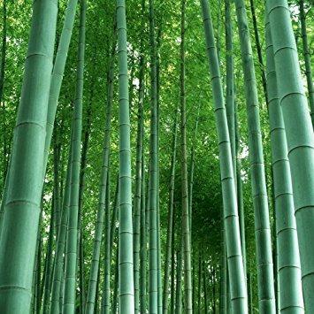 naturales activadas de carbón de bambú eliminador de olore