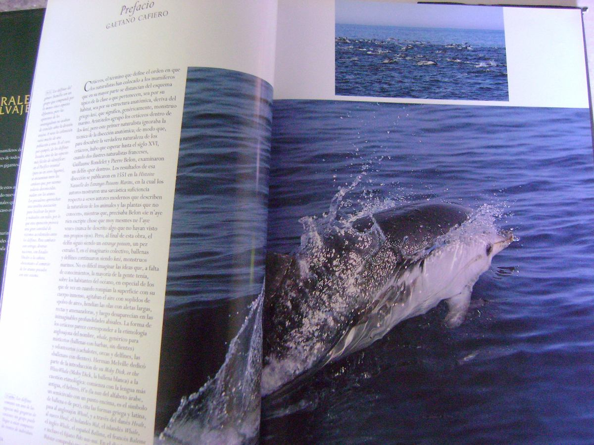 Naturaleza Salvaje. Los Gigantes Del Mar - Gaetano Cafiero ...
