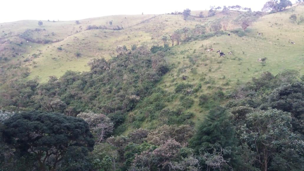 negociable 16 hectáreas excelente zona ganadera agua potable
