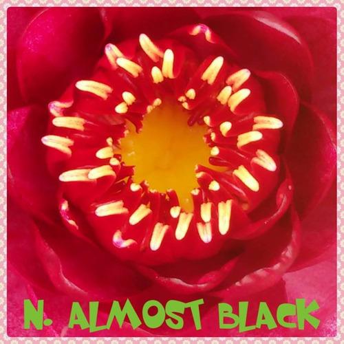 nenufar almost black