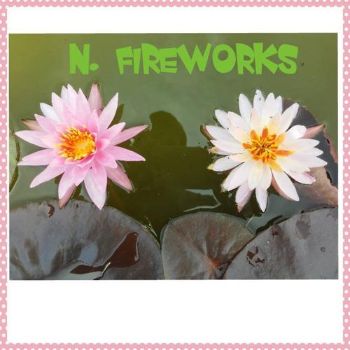 nenufar fireworks