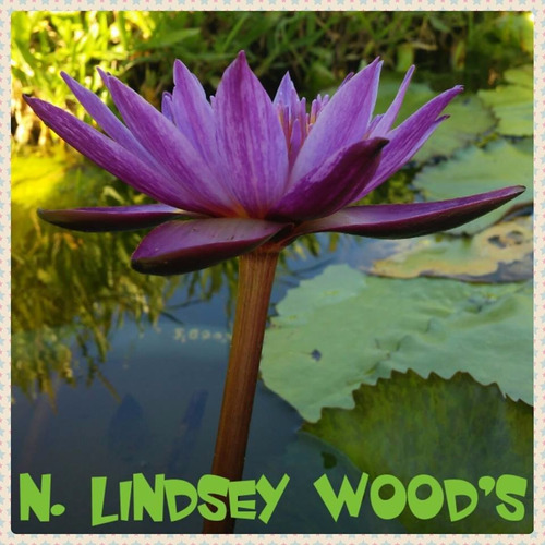 nenufar lindsey wood´s