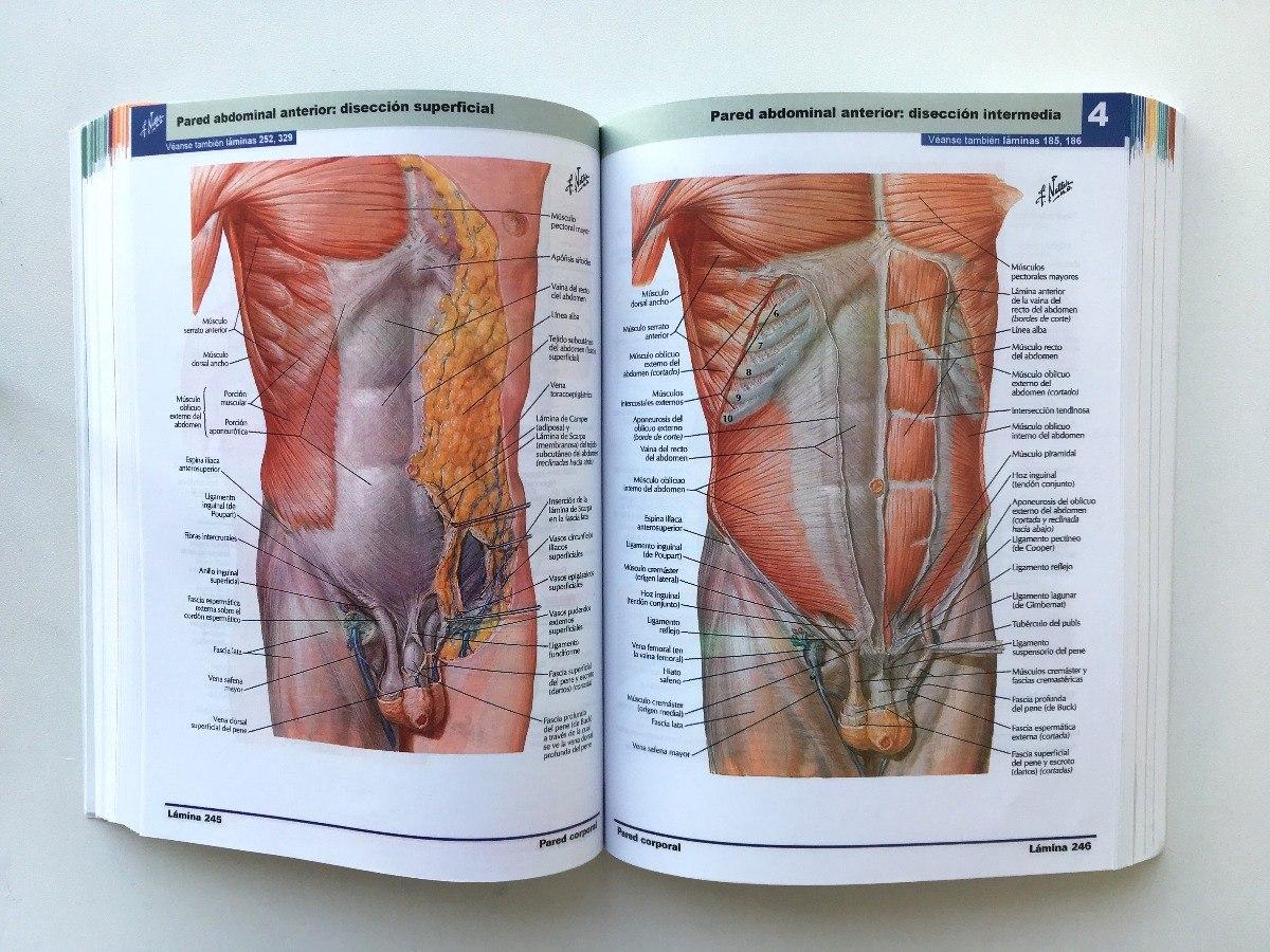 Netter 6º Edición + Cd - Atlas De Anatomía - Envío Gratis - $ 15.990 ...