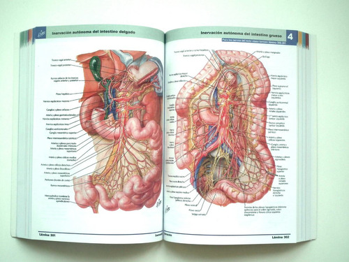 netter 6ta edición atlas de anatomía - envio gratis