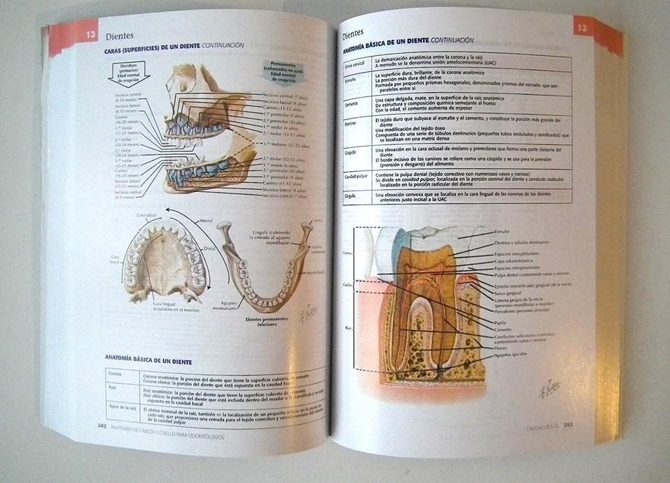 Netter Anatomía Cabeza Y Cuello. 2a Ed De Bolsillo - $ 23.000 en ...