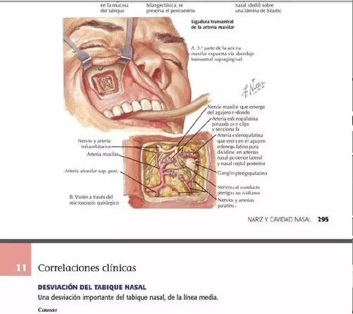 Netter Anatomía De Cabeza Y Cuello Para Odontologos 2 Ed Pdf - U$S ...