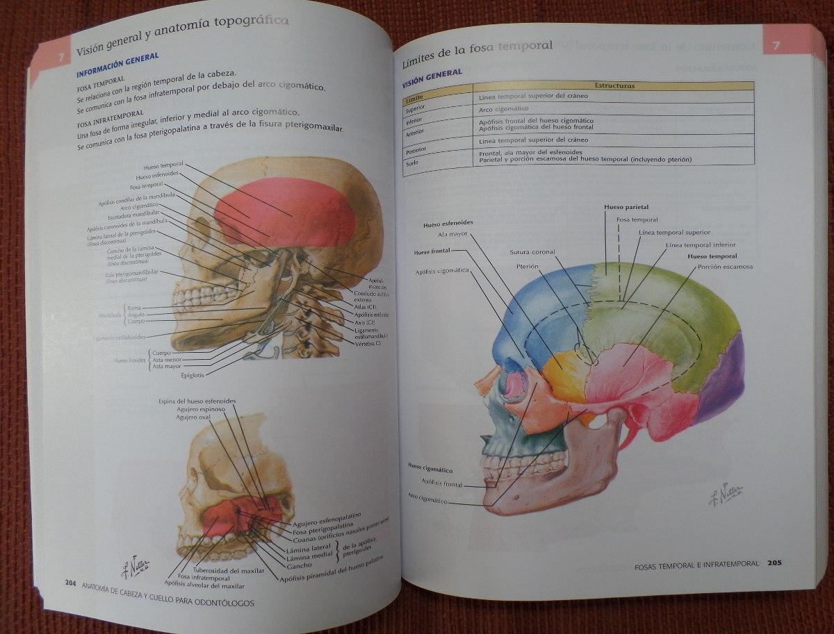 anatomia de cabeza y cuello para odontologos netter
