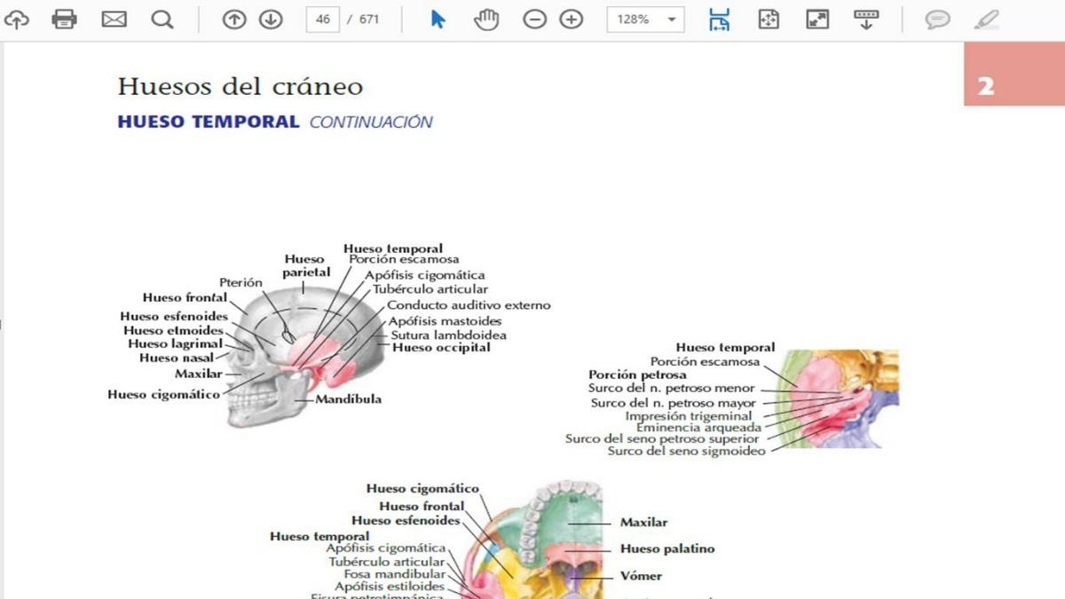 Lujoso Petrosa Anatomía Hueso Temporal Inspiración - Anatomía de Las ...