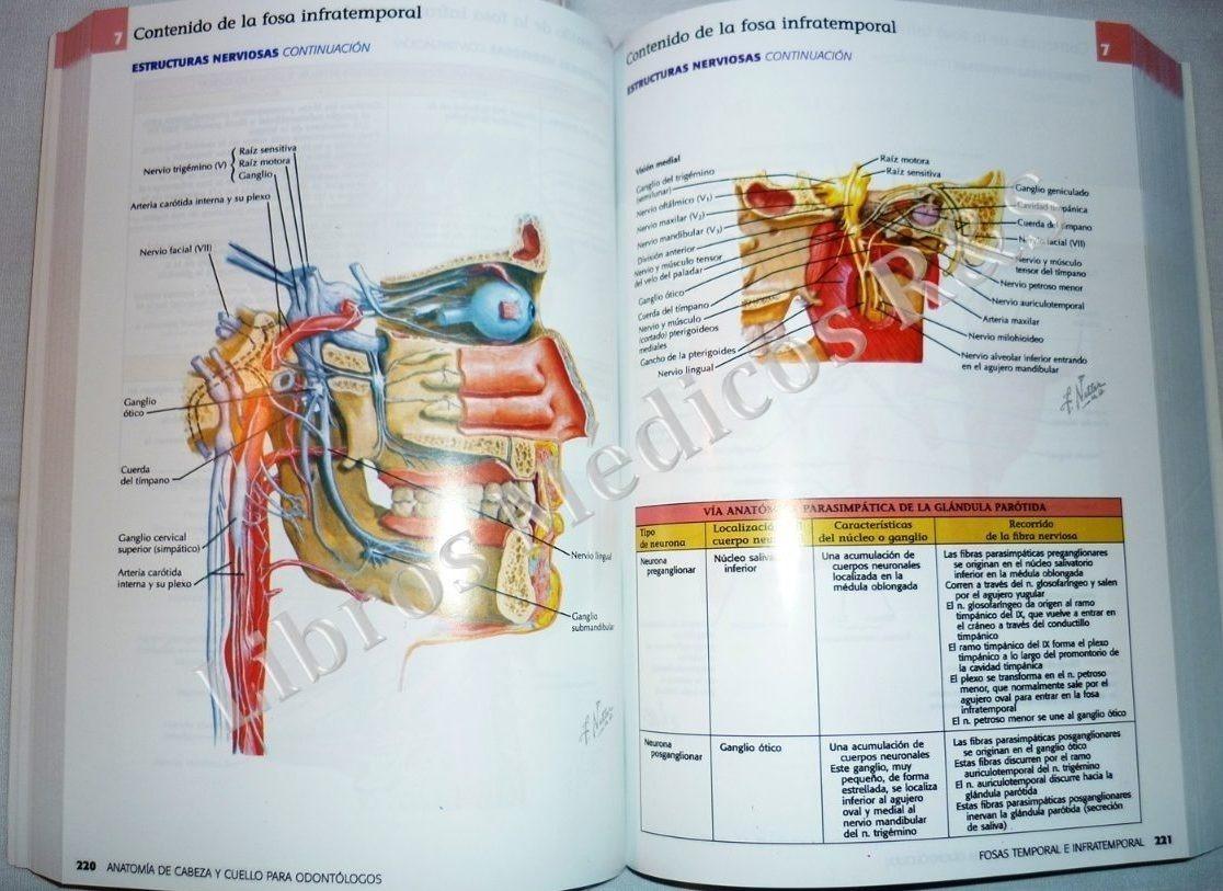 Netter. Anatomía De Cabeza Y Cuello Para Odontólogos - Neil ...