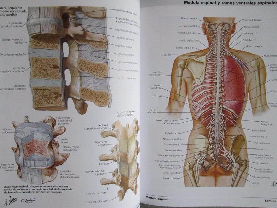 Netter Atlas De Anatomía Humana 6ta Edición - Elsevier - $ 345.000 ...
