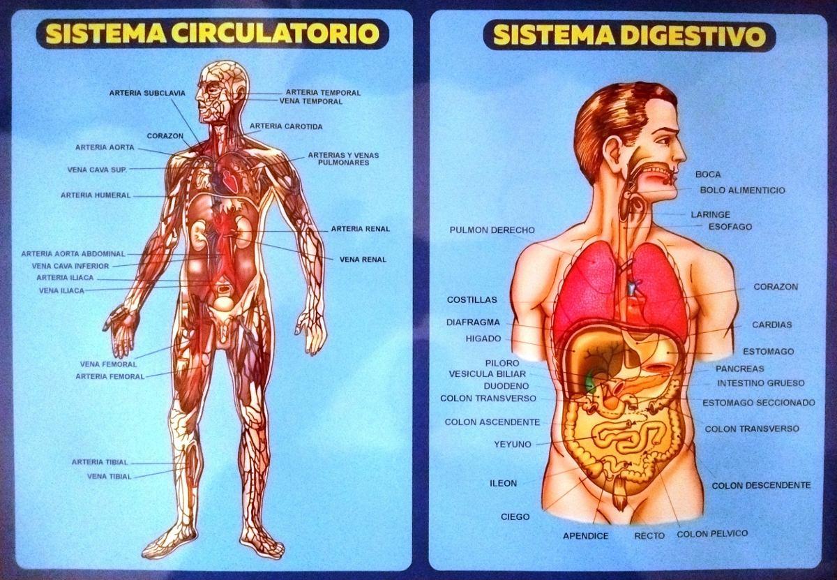 Netter Cuaderno Anatomia Colorear + 2 Laminas Anat Combo.!!! - $ 675 ...