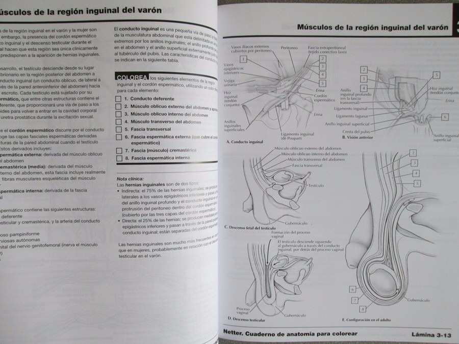 Netter Cuaderno De Anatomía Para Colorear 2 Edición Elsevier ...