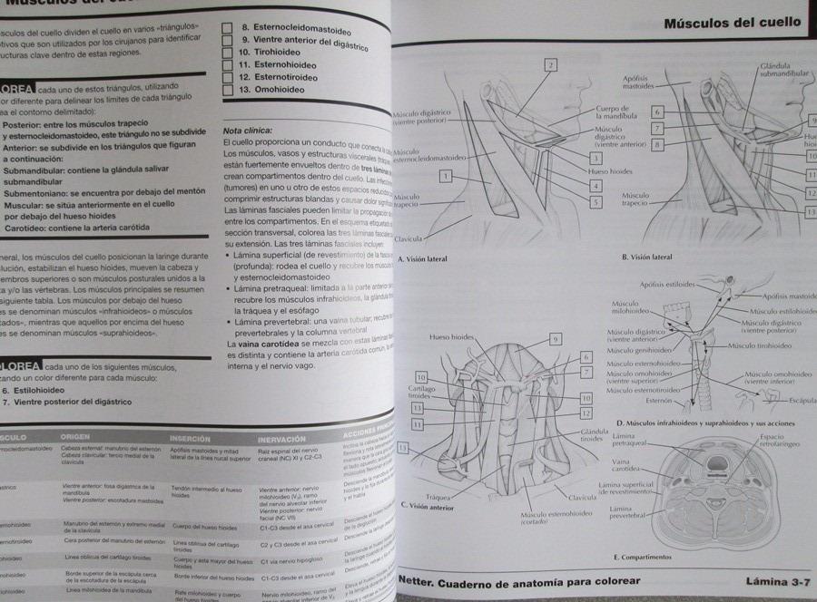 Fantástico El Libro Para Colorear De Anatomía 3ra Edición Molde ...