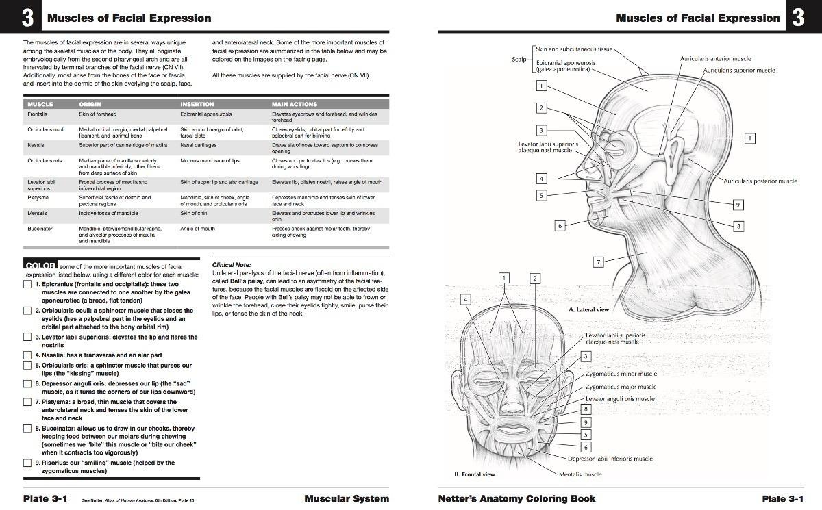 Netter Cuaderno De Anatomia Para Colorear 2 Edicion Pdf Dig - S/ 20 ...