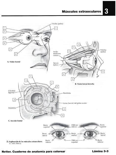 Netter Cuaderno De Anatomía Para Colorear - $ 12.890 en Mercado Libre