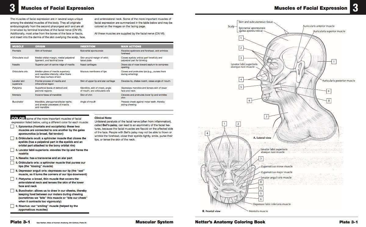 Netter Cuaderno De Anatomia Para Colorear Jpg - U$S 1.00 en Mercado ...