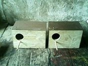 nidos de agapornis