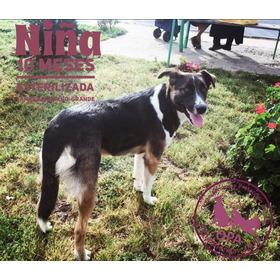 Niña Cachorra De 10-11 Meses, Vacunada, Desparasitada