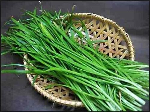 nira alho japonês cebolinha allium -300 sementes -