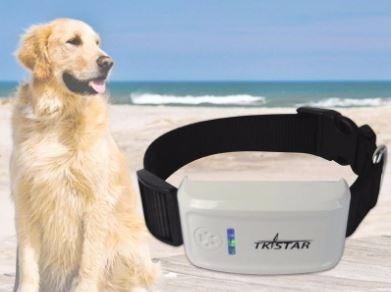 no pierdas a tu perro! localizador gps - gps tracker