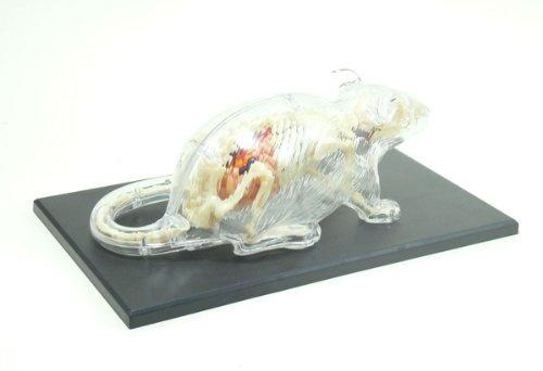 No.14 Esqueleto De Anatomía De Rata Modelo Skynet Tridimens ...