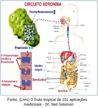 noni-fruta-sem-agrotoxico-1-kilo-D_NQ_NP_996189-MLB26986203861_032018-F.jpg