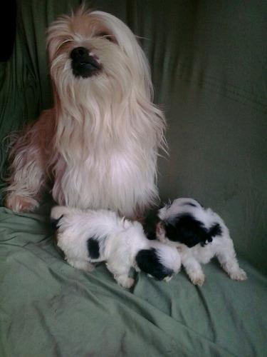novos e lindos filhotes..