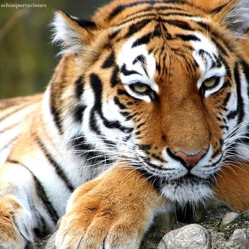 nueva pulsera de hematita + ojo de tigre -premium-exclusiva