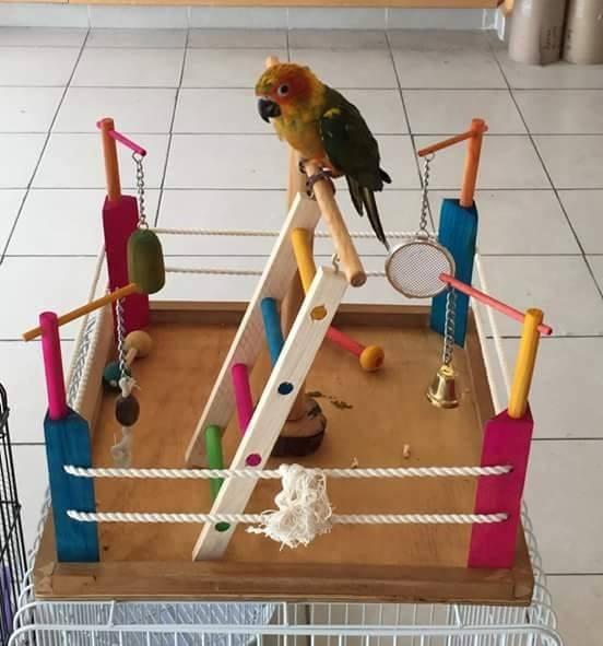 Resultado de imagen para gimnasio de aves