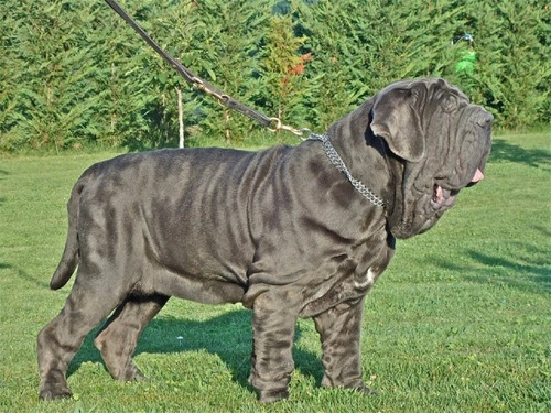 nutram sound lamb adult dog de 13,6 kilos made in canadá