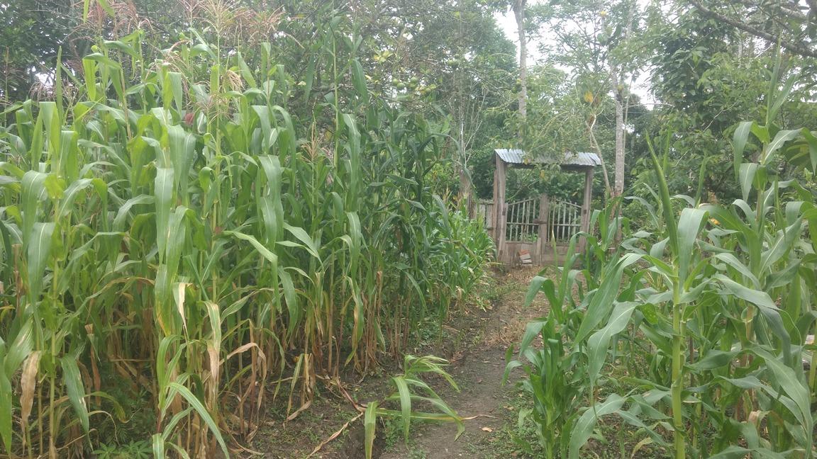 ocasiòn vendo terreno entre rodriguez de mendoza y huambo