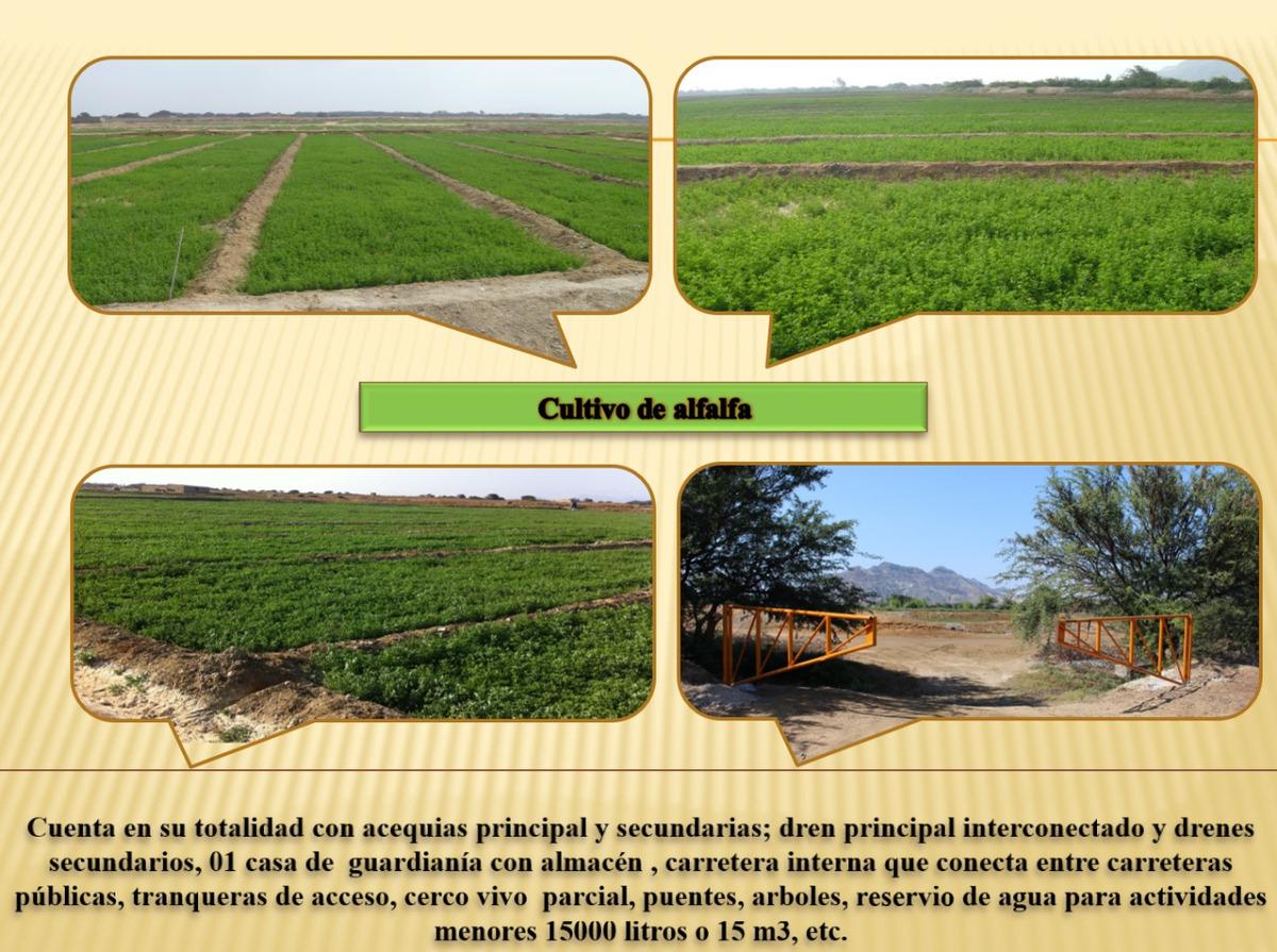ocasión - venta de predio agrícola - chepén - la libertad