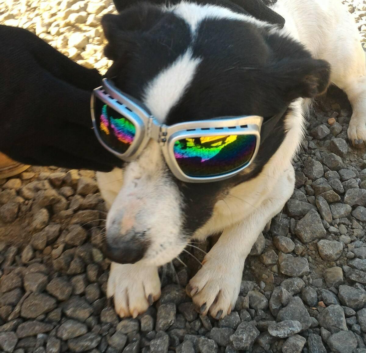 6ad9fba4ede21 óculos cachorro quadrado metálico proteção uv. Carregando zoom.