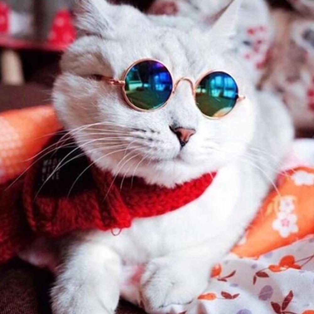 1e7279aa3879b Óculos De Sol Da Moda Pet Cães E Gato Promoção - R  29