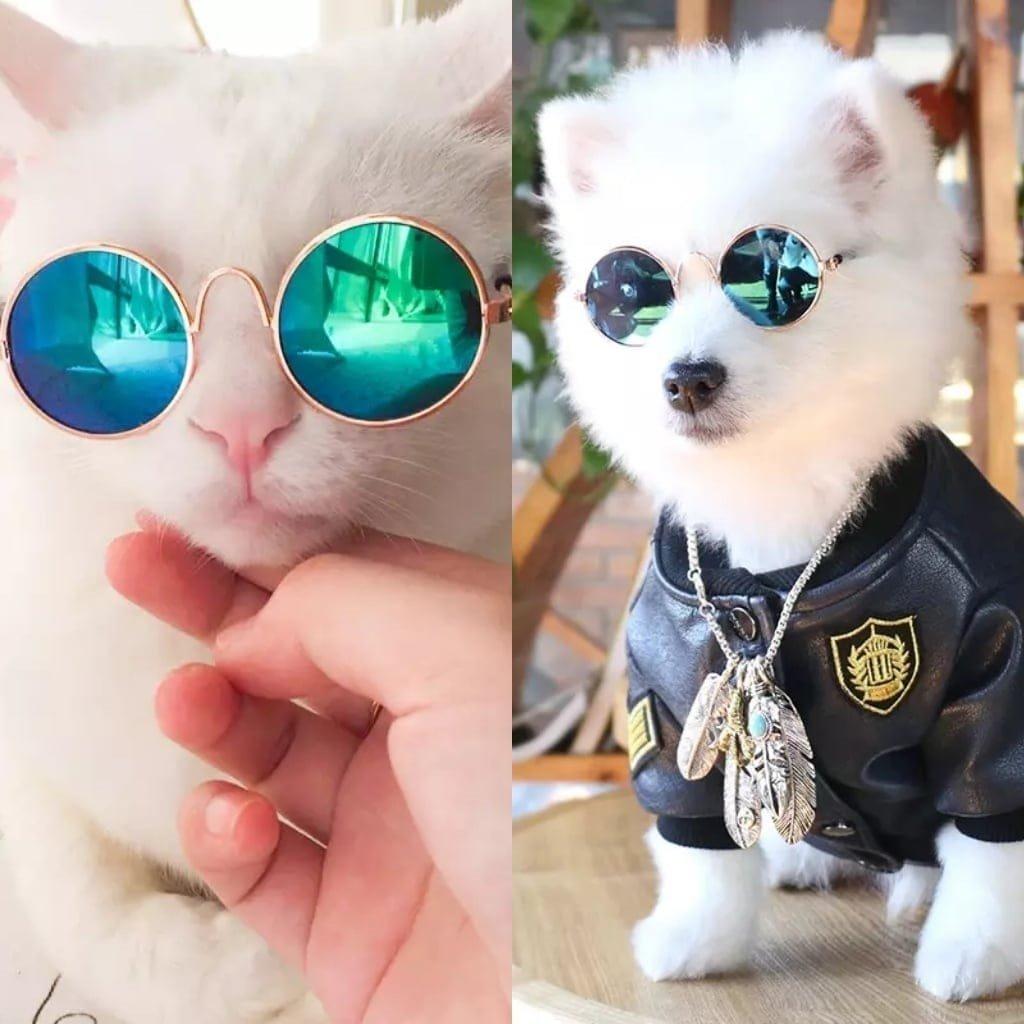 82af3ad4e6424 Óculos De Sol Pet E Transparente Cão E Gato - R  25,80 em Mercado Livre