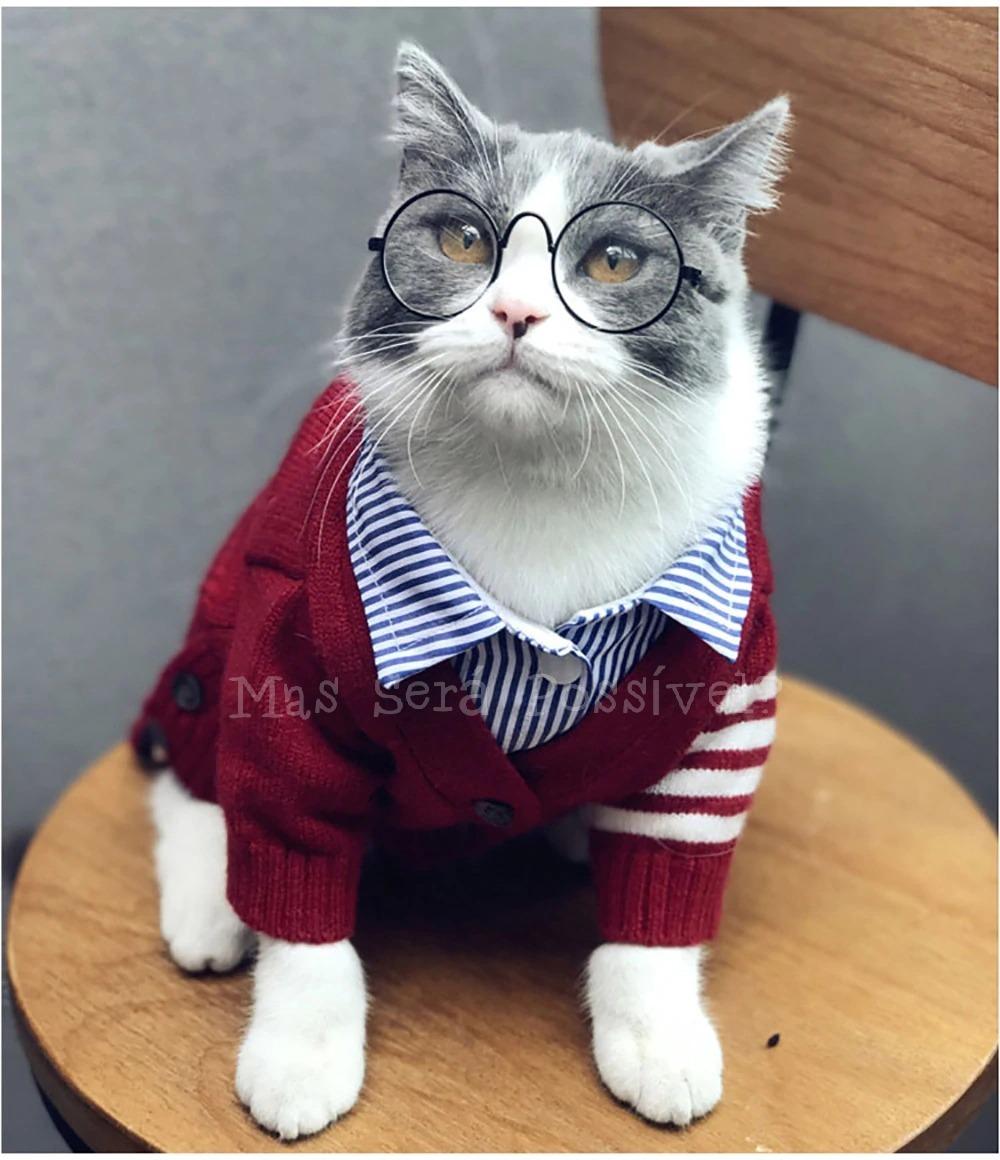 fefc4d52806c8 óculos pet amarelo ou transparente -gatos e cães-roupa pet. Carregando zoom.