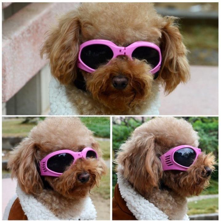 96916db93fb46 Óculos Pet Dog Cães Goggles Oculos Cachorro Frete Grátis - R  100
