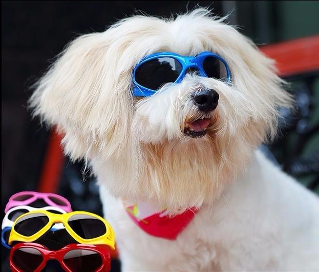 ae1d50e81d44a Óculos Pet Dog Cães Goggles Oculos Cachorro Frete Grátis - R  100,00 em  Mercado Livre