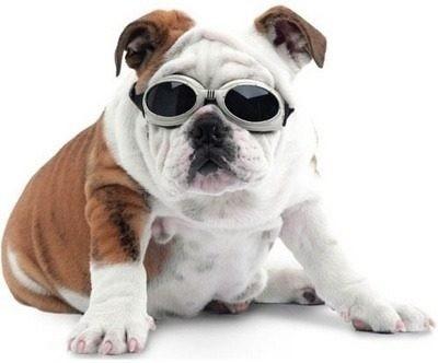 d20da0b5552ad Óculos Pet Dog Goggles Oculos Cachorro Oculos Caes - R  60