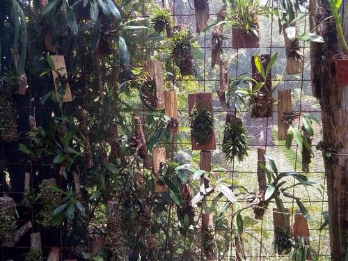 oferta combo 5 orquídeas nativas + fertilizante de regalo
