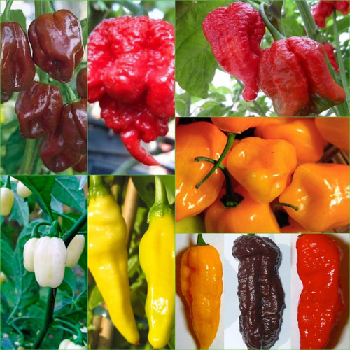 oferta! mix de chiles exoticos