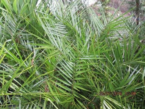 oferta plantas ornamentales variedades en