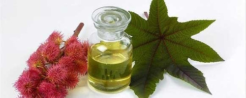 óleo de vegetal de ríceno / mamona c/ laudo - 1 litro
