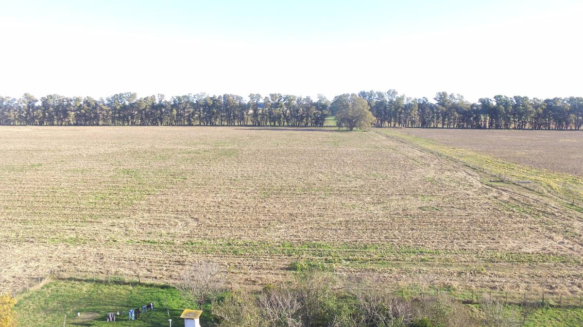 oportunidad! 47 hectáreas agr. s/ruta nac.5 km 110. mercedes
