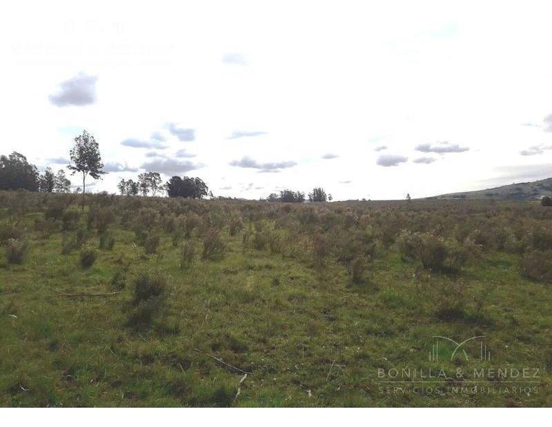 oportunidad chacra de 8 hectáreas en pan de azúcar, ruta 9