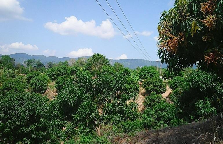 oportunidad: finca de produccion de frutas