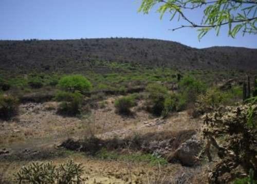 oportunidad  para invertir en un terreno de 705 hectáreas con uso agropecuario.