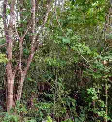 oportunidad terreno en venta 1,000 m2 en alfredo bonfil cancun c2287
