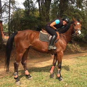db0089e4c Hipismo - Cavalos no Mercado Livre Brasil